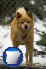 arkansas a Finnish Spitz dog in a kennel, with a blurred chain-link fence