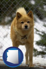 arizona map icon and a Finnish Spitz dog in a kennel, with a blurred chain-link fence