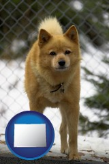 colorado map icon and a Finnish Spitz dog in a kennel, with a blurred chain-link fence