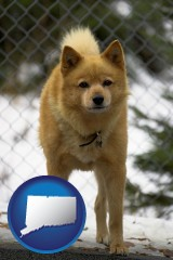 connecticut map icon and a Finnish Spitz dog in a kennel, with a blurred chain-link fence