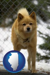 illinois map icon and a Finnish Spitz dog in a kennel, with a blurred chain-link fence
