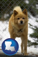 louisiana a Finnish Spitz dog in a kennel, with a blurred chain-link fence