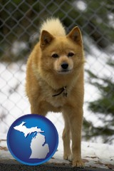 michigan map icon and a Finnish Spitz dog in a kennel, with a blurred chain-link fence