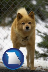missouri map icon and a Finnish Spitz dog in a kennel, with a blurred chain-link fence