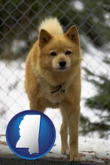 mississippi a Finnish Spitz dog in a kennel, with a blurred chain-link fence