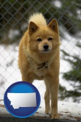 montana map icon and a Finnish Spitz dog in a kennel, with a blurred chain-link fence