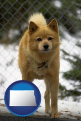 north-dakota a Finnish Spitz dog in a kennel, with a blurred chain-link fence