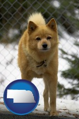 nebraska map icon and a Finnish Spitz dog in a kennel, with a blurred chain-link fence