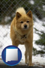 new-mexico a Finnish Spitz dog in a kennel, with a blurred chain-link fence