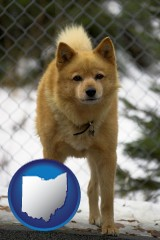 ohio map icon and a Finnish Spitz dog in a kennel, with a blurred chain-link fence