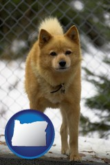 oregon map icon and a Finnish Spitz dog in a kennel, with a blurred chain-link fence