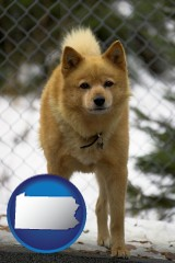 pennsylvania map icon and a Finnish Spitz dog in a kennel, with a blurred chain-link fence