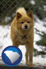 south-carolina map icon and a Finnish Spitz dog in a kennel, with a blurred chain-link fence