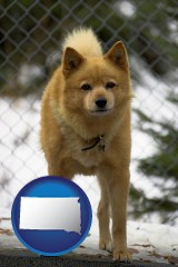 south-dakota map icon and a Finnish Spitz dog in a kennel, with a blurred chain-link fence