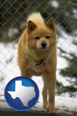 texas a Finnish Spitz dog in a kennel, with a blurred chain-link fence