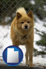utah map icon and a Finnish Spitz dog in a kennel, with a blurred chain-link fence