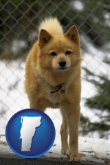 vermont map icon and a Finnish Spitz dog in a kennel, with a blurred chain-link fence