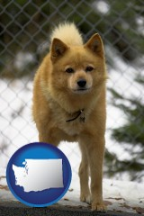 washington map icon and a Finnish Spitz dog in a kennel, with a blurred chain-link fence