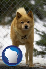wisconsin map icon and a Finnish Spitz dog in a kennel, with a blurred chain-link fence