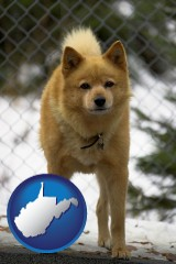 west-virginia map icon and a Finnish Spitz dog in a kennel, with a blurred chain-link fence