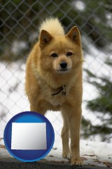 wyoming a Finnish Spitz dog in a kennel, with a blurred chain-link fence