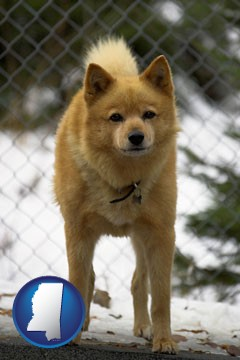 a Finnish Spitz dog in a kennel, with a blurred chain-link fence - with Mississippi icon