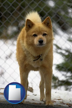 a Finnish Spitz dog in a kennel, with a blurred chain-link fence - with Utah icon